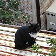 三姉弟猫/ベランダ/にゃんこ同好会 昨日の事 温かい午後ベランダから 下にい…(3枚目)