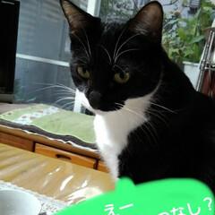 白黒猫/にゃんこ同好会 さわやかな土曜日の朝です 今日は皆さんお…