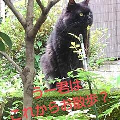 猫のいる生活 昨日 夕方の散歩に行く前な事  黒井さん…(6枚目)