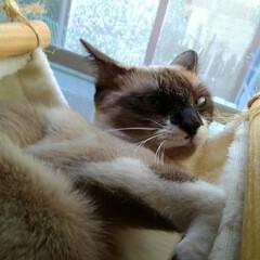 猫/変顔/フォロー大歓迎/次のコンテストはコレだ! いつもと違う個性的な笑える顔 変顔と言う…