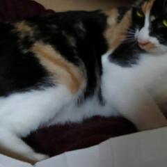 猫のいる生活 昨日の事 三匹が交代で箱入りさんしてました(3枚目)