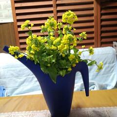 春 昨日の収穫の中に 嬉しい物があったの 菜…(2枚目)