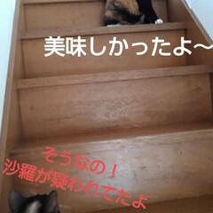 猫のいる生活/にゃんこ同好会/にゃんこ日めくり おはようございます🐱🐱 6月6日 土曜日…(4枚目)