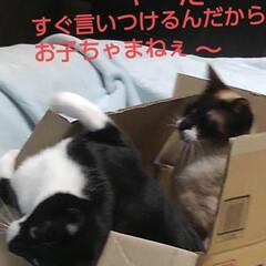 猫のいる生活/にゃんこ同好会/ねこ 箱入り息子と箱入り娘が喧嘩して 仲直りし…(7枚目)
