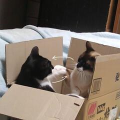 猫のいる生活/にゃんこ同好会/ねこ 箱入り息子と箱入り娘が喧嘩して 仲直りし…(4枚目)