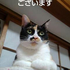 猫のいる暮らし/にゃんこ日めくり おはようございます 7月15日 水曜日で…