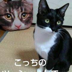 猫のいる生活/白黒猫/にゃんこ同好会/にゃんこ日めくり おはようございます 4月29日 水曜日で…(3枚目)