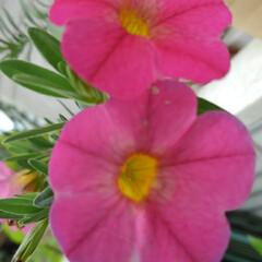 庭の夏の花/フォロー大歓迎/夏のお気に入り/写真/夏の花 庭に咲いている夏の花達(1枚目)