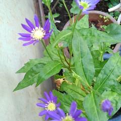 花のある生活 沙羅ちゃんが見ていたお花(3枚目)