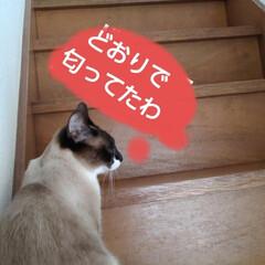 猫のいる生活/にゃんこ同好会/にゃんこ日めくり おはようございます🐱🐱 6月6日 土曜日…(6枚目)