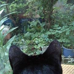 猫のいる生活/にゃんこ同好会/にゃんこ日めくり おはようございます 6月20日 土曜日で…