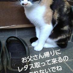 三毛猫/猫のいる生活/にゃんこ同好会/にゃんこ日めくり おはようございます 今日は良い天気です …(4枚目)