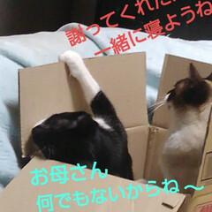 猫のいる生活/にゃんこ同好会/ねこ 箱入り息子と箱入り娘が喧嘩して 仲直りし…(9枚目)