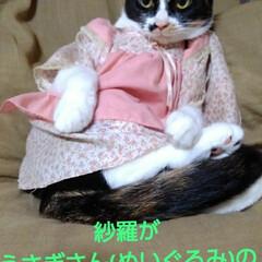 モデル/三毛猫/猫/フォロー大歓迎/LIMIAペット同好会/にゃんこ同好会/... 紗羅にうさぎさん(ぬいぐるみ)の お洋服…