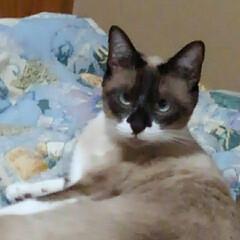 猫のいる生活/にゃんこ日めくり おはようございます😃🐱 7月16日 木曜…