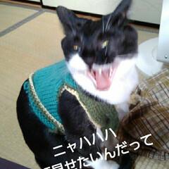 猫の気持ち/猫のいる暮らし/にゃんこ同好会 前にお洋服着たときの 面白かった顔特集(…