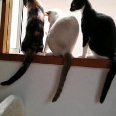 秋/ペット/猫 何をするにも三匹一緒