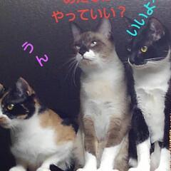 遊び/三姉弟/猫/フォロー大歓迎/LIMIAペット同好会/にゃんこ同好会/... ハンターごっこ  決めポーズにこだわる瑠…
