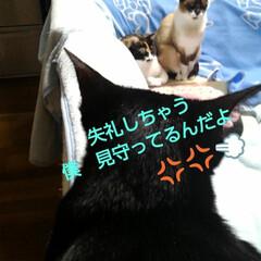 三姉弟猫/ねこ/にゃんこ同好会/猫のいる生活 昨日の夕方のひとこま 瑠月と沙羅が寝てる…(1枚目)