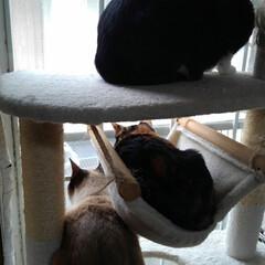 猫のいる生活/三姉弟猫/にゃんこ同好会/にゃんこ日めくり おはようございます🙀🙀🙀 暖かな朝 3月…