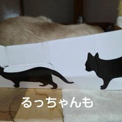 猫のいる生活 昨日の事 三匹が交代で箱入りさんしてました(5枚目)