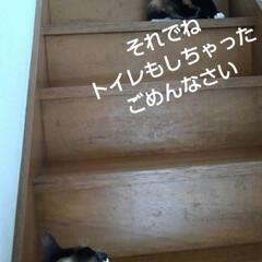 猫のいる生活/にゃんこ同好会/にゃんこ日めくり おはようございます🐱🐱 6月6日 土曜日…(5枚目)