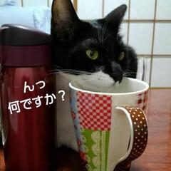 にゃんこ同好会 紗夢 珍しい寝かた  マグカップにあごの…