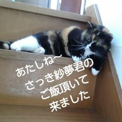 猫のいる生活/にゃんこ同好会/にゃんこ日めくり おはようございます🐱🐱 6月6日 土曜日…(2枚目)