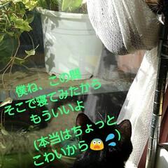 リミアペット同好会/猫/姉弟/昼寝/リミアの冬暮らし 午前中、居間のこの場所は お日様が差し込…(3枚目)