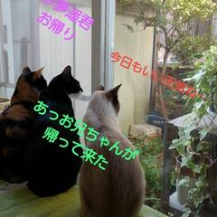 猫/三姉弟/ここが好き 今日もいい天気で一日が始まってます 3に…