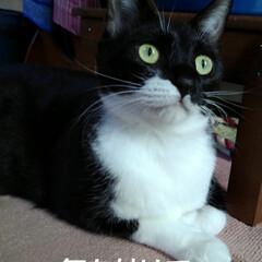 にゃんこ同好会/にゃんこ日めくり/白黒猫 おはようございます🐱 2月6日の朝です …(3枚目)