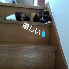 猫のいる生活/にゃんこ同好会/にゃんこ日めくり おはようございます🐱🐱 6月6日 土曜日…(9枚目)