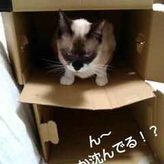 猫のいる生活/にゃんこ同好会/ねこ お父さんが同じような箱を 重ねて置いたら…(5枚目)