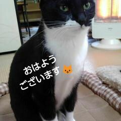にゃんこ同好会/お見送り/白黒猫/フォロー大歓迎/リミアの冬暮らし おはようございます🐱 寒さが段々増してき…