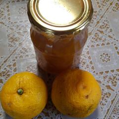 柚子 お隣から柚子ジャム頂きました