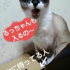 猫のいる暮らし/ねこ/にゃんこ同好会 雨の日  お暇な人(3️⃣にゃんず)達が…(2枚目)