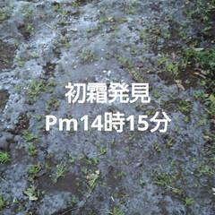初冬/初霜/リミアの冬暮らし 昨日の午後(11月30日)、畑に2時過ぎ…