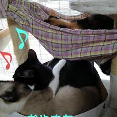 三姉弟/猫のいる暮らし/にゃんこ同好会 今日のお昼寝スタイル  甘えん坊紗夢がる…