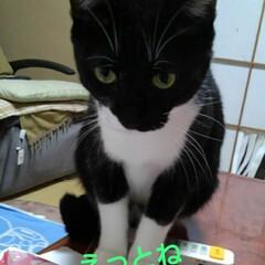 白黒猫/にゃんこ同好会 紗夢の独り言  僕 甘えん坊、甘えん坊っ…