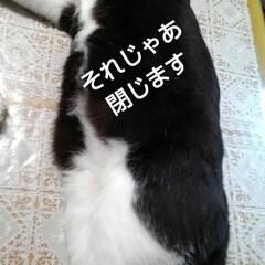 猫のいる暮らし/ねこ/にゃんこ同好会 紗夢のお昼寝(2枚目)