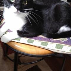 猫の気持ち/猫のいる生活/白黒猫 私が具合の悪いときに 紗夢が心配そうに見…(5枚目)