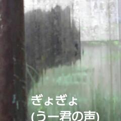 猫のいる生活 昨日 夕方の散歩に行く前な事  黒井さん…(9枚目)