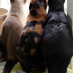 見張り隊/猫/三姉弟/フォロー大歓迎 朝から選挙のアナウンスが 始まっています…