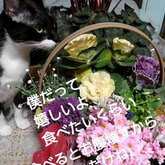 花のある暮らし/にゃんこ同好会 昨日は娘達から時間差攻撃で お花が届きま…(3枚目)