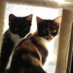 見張り隊/猫/三姉弟猫/LIMIAペット同好会/にゃんこ同好会/うちの子ベストショット 今日もしっかりお仕事 「お母さん 邪魔し…