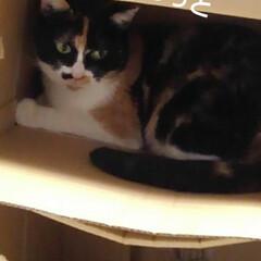 猫のいる生活/にゃんこ同好会/ねこ お父さんが同じような箱を 重ねて置いたら…(3枚目)