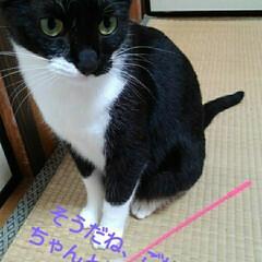 猫の気持ち/にゃんこ同好会/にゃんこ日めくり/ダイソー/梅雨/梅雨対策/... おはようございます 7月5日 日曜日です…(3枚目)