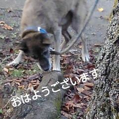 風景/ワンコ同好会/犬 おはようございます🐶  昨日は落ち葉がい…(1枚目)