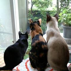 お外見張り隊/三姉弟猫/雨季ウキフォト投稿キャンペーン/フォロー大歓迎/LIMIAペット同好会/にゃんこ同好会 白いにゃんこさんがお外にいたので3にゃん…(3枚目)