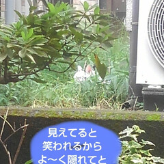 リミアペット同好会/猫/シャム/フォロー大歓迎 すれ違いに待っていた 可愛いカップルの待…(9枚目)